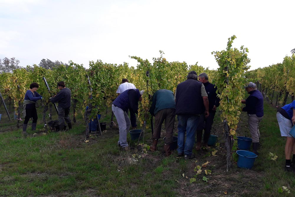 Vendanges manuelles